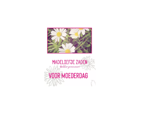 Madeliefje