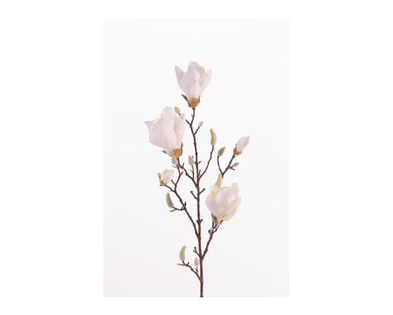 Witte magnolia