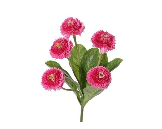 rose madeliefjes