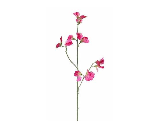 Lathyrus fel rose