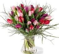 Tulpen pracht