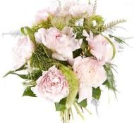 Lieve roze pioen