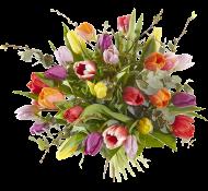 Tulpen pracht kleur