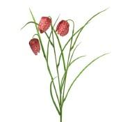 Fritularia