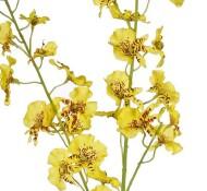 Oncidium geel