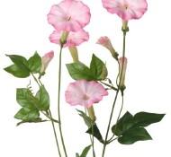 Rose Winde