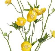 boterbloem geel