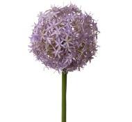 Allium paars