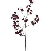 Helleborus lang burgundy
